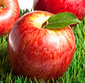 Picture of Organic Gala Apples
