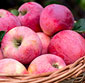 Picture of Juici Apples