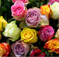 Picture of Rainbow Roses