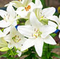Picture of White Garden Bouquet