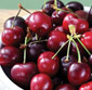 Picture of Northwest Dark Red Sweet Cherries