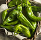 Picture of New Mexico Hatch Mild or Hot Chile Peppers