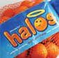 Picture of Fresh Juicy Halos Clementines