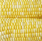 Picture of Yellow, White or Bi-Color Corn