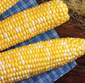 Picture of Olathe Bi-Color Sweet Corn
