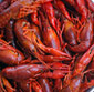 Picture of Cooked & Seasoned Crawfish