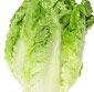 Picture of Sweet Gem Lettuce