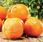 Picture of California Navel Oranges