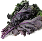 Picture of Organic Red & Green Kale