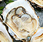 Picture of Fresh Live Oysters in the Shell