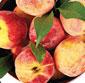 Picture of Prima Gattie Extra Large California Peaches