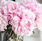 Picture of Peonies