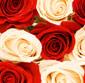 Picture of Fresh Cut Dozen Rose Bouquet