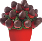 Picture of Dozen Chocolate Covered Strawberries with Vase