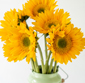 Picture of 5 Stem Sunflower Bunch