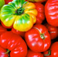 Picture of Organic Heirloom Tomatoes