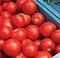 Picture of Large Red Roma Tomatoes