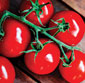 Picture of Red Ripe On-the-Vine Tomatoes