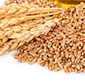 Picture of Toasted Wheat Germ