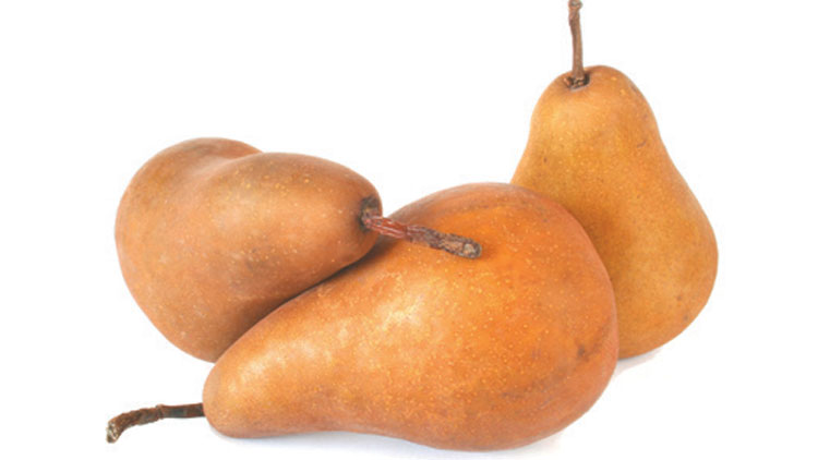 Picture of Washington D'Anjou or Bosc Pears