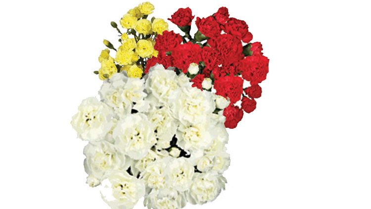 Picture of Mini Carnation Bunch