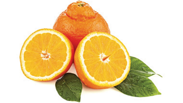 Picture of Sunkist Minneola Tangelos